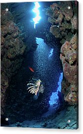 Inside Canyon Acrylic Print by Nature, Underwater And Art Photos. Www.narchuk.com