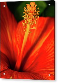 Into A Flower Acrylic Print