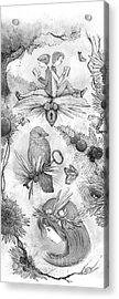 Into An Open Book Acrylic Print