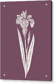 Iris Purple Flower Acrylic Print