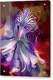 Iris Splendor 12 Acrylic Print