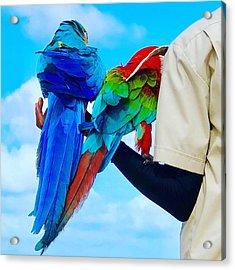 Island Birds  Acrylic Print
