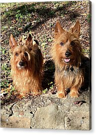 Jack And Lily 2 Acrylic Print