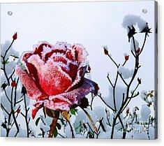 Jack Frost Acrylic Print