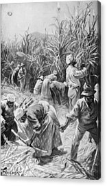 Jamaican Cane Cutters Acrylic Print by Hulton Archive