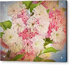 Japanese Cherry Tree  Blossoms Acrylic Print