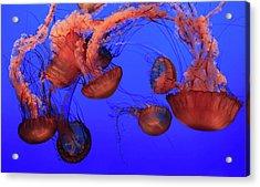 Jellyfish Acrylic Print by Ionut Iordache