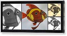 John Dory - Multi Acrylic Print