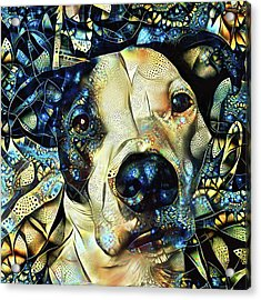 Joshua The Staffordshire Terrier Great Dane Cross Acrylic Print