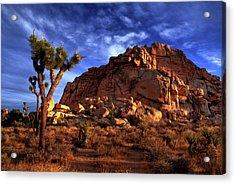 Joshua Tree And Rock Pile Acrylic Print