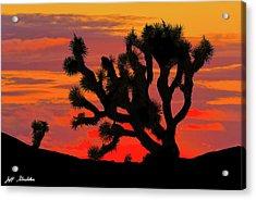 Joshua Tree At Sunset Acrylic Print