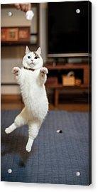 Jumping Cats Acrylic Print by Nazra Zahri