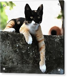 Just Chillin Tricolor Cat Acrylic Print
