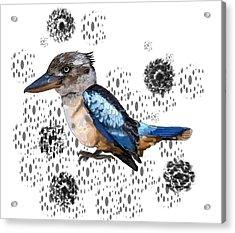 K Is For Kookaburra Acrylic Print