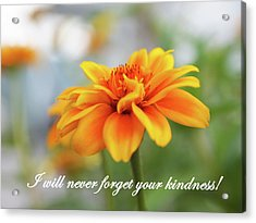 Kindness Acrylic Print