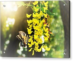 Kissed By The Sun Acrylic Print