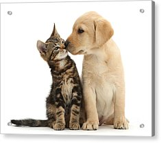 Acrylic Print featuring the photograph Kisses For My Darling by Warren Photographic