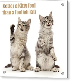 Acrylic Print featuring the photograph Kitty Fools by Warren Photographic