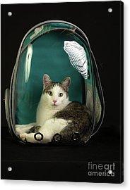 Kitty In A Bubble Acrylic Print