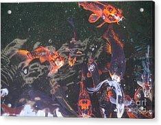 Koi In A Pond Acrylic Print
