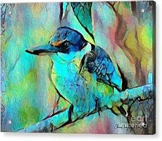 Kookaburra Blues Acrylic Print