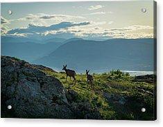 Kuipers Peak Deer Acrylic Print
