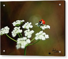 Ladybug In White Acrylic Print