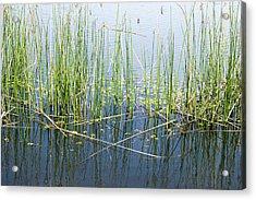 Lake Ilsanjo_533_18 Acrylic Print