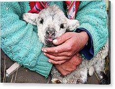 Lamb Sitting On Shepherd-girls Lap Acrylic Print by Uros Ravbar