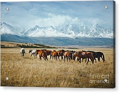 Landscape With Wild Horses Near The Acrylic Print