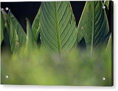 Large Dark Green Leaves Acrylic Print