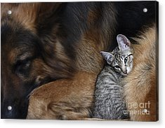Large Dog And A Cat Acrylic Print