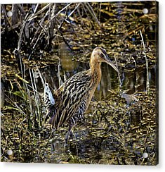 Largest North American Rail Acrylic Print