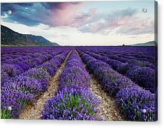 Acrylic Print featuring the photograph Lavender Field by Nicole Young