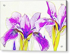 Lavender Irises Acrylic Print