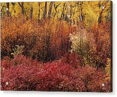 Layers Of Color Acrylic Print by Leland D Howard