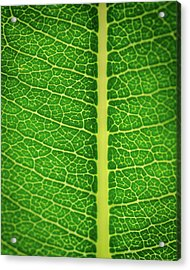 Leafy Detail Acrylic Print
