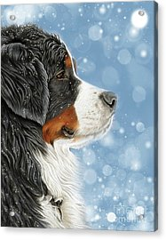 Acrylic Print featuring the mixed media Let It Snow - Arctic Blue by Donna Mulley