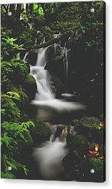 Let Your Heart Decide Acrylic Print