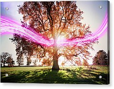 Light Trails Passing Around Tree Acrylic Print by Robert Decelis Ltd