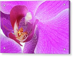 Lilac Orchid Acrylic Print by Andrew Dernie