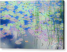 Lily Pads1 Acrylic Print