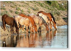 Lineup At The Pond-- Wild Horses Acrylic Print