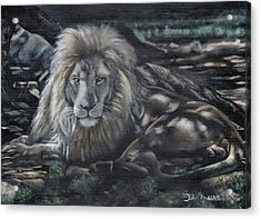 Lion In Dappled Shade Acrylic Print