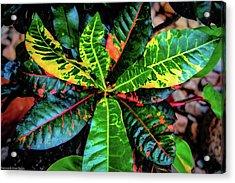 Liquid Tropical Colors Acrylic Print
