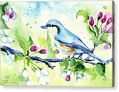 Little Blue Spring Bird Acrylic Print
