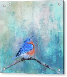 Little Boy Blue Acrylic Print