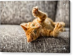 Little Cat Playing On The Bed Acrylic Print