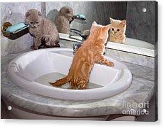 Little Kittens Bathing In The Sink Acrylic Print by Vvvita
