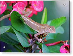 Acrylic Print featuring the photograph Little Lizard by Nicole Young